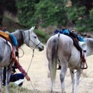 2013 SY Competitive Trail Ride